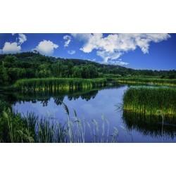 Artistic Lake