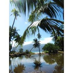 Palmtree getaway