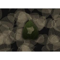 Digital leaves